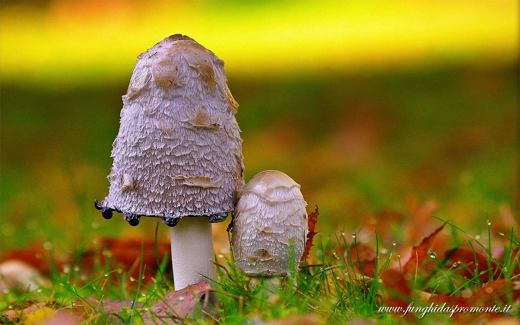 In regalo un nuovo sfondo per desktop funghi d 39 aspromonte for Foto spettacolari per desktop