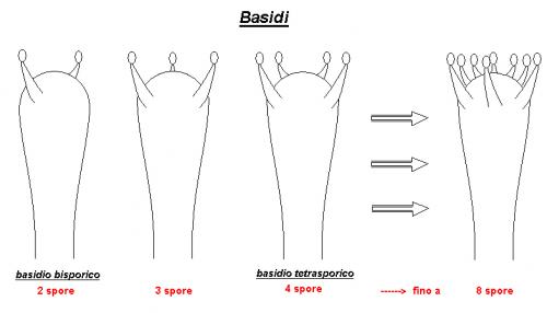 Basidi