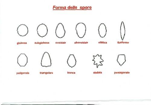 Forma Spore
