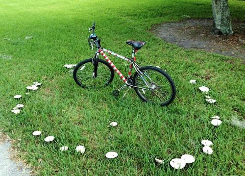 Bici-e-funghi