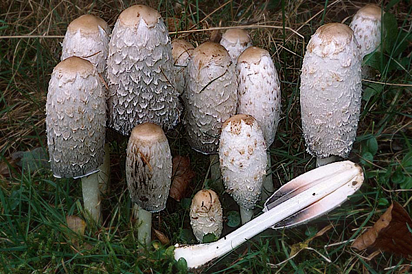 Cura di unghie su mani dopo un fungo
