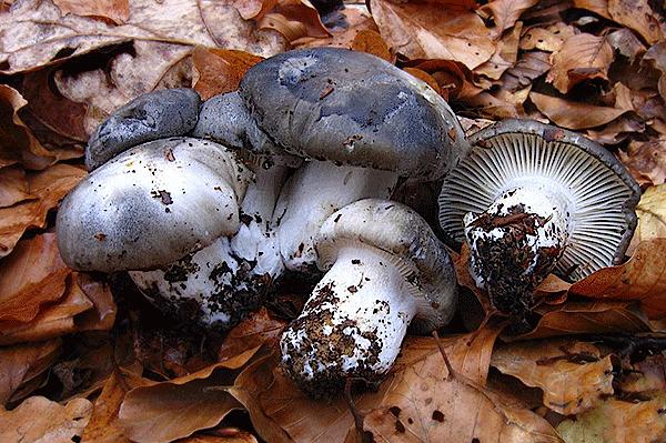 Il fungo in un naso come conservarsi