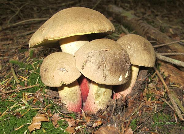 Sale da una posizione di fungo