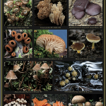 Posterfunghi