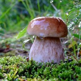 pioggia-e-fungo