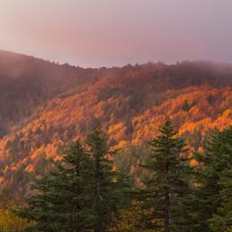 Foreste dell'alto Aspromonte